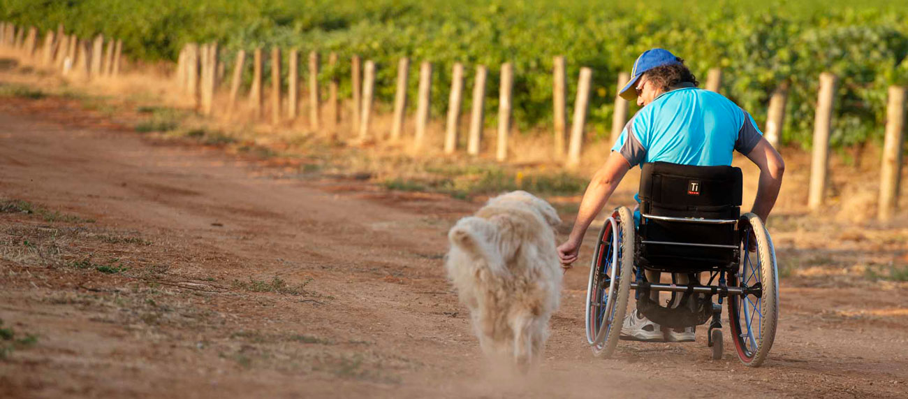 Charlie in his wheelchair amongst the vines with his dog beside him