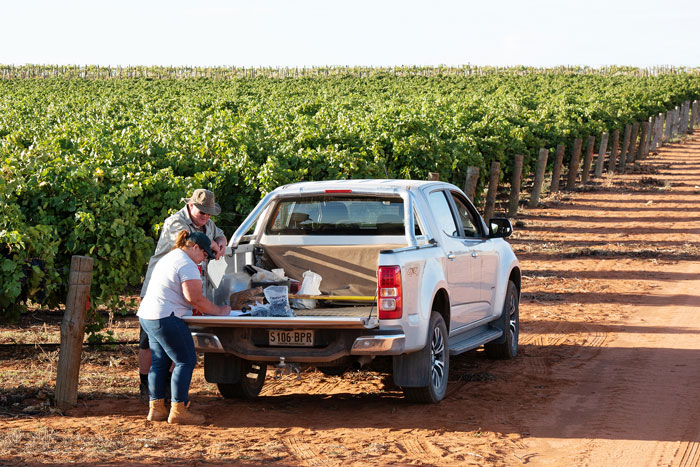 two people standing next to ute in the middle of verland vineyards