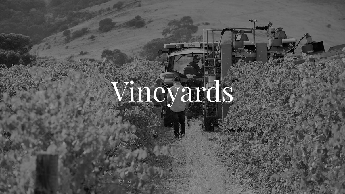 DW_home-vineyards-BW