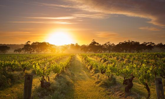 Sunset behind Barossa Valley Vineyards